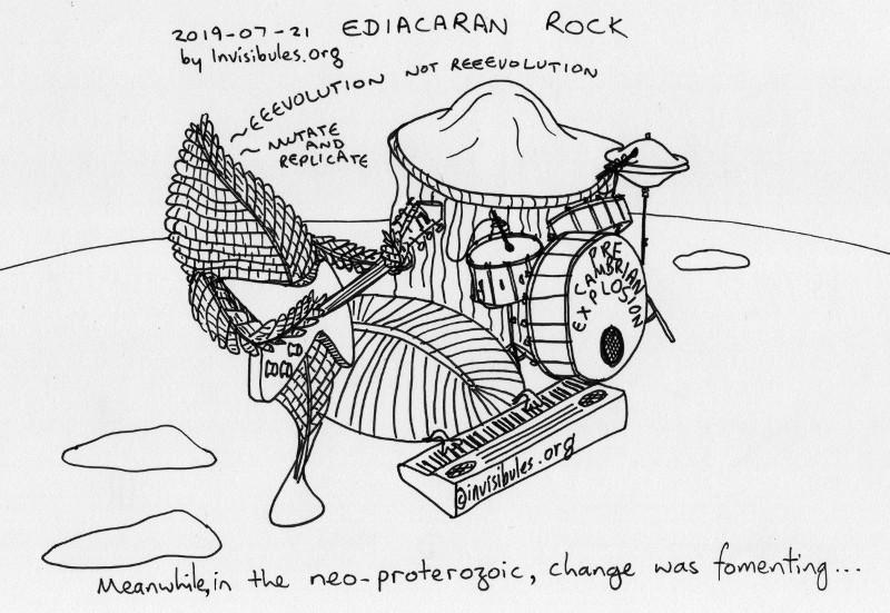 2019-07-21 Ediacaran Rock